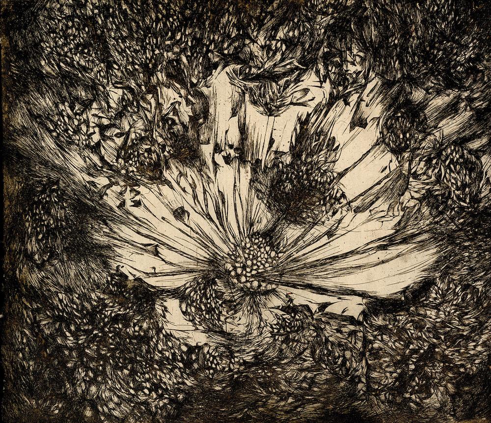 Seed Explosion , Rachel Singel