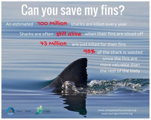 Saving-Sharks-Image1.jpg