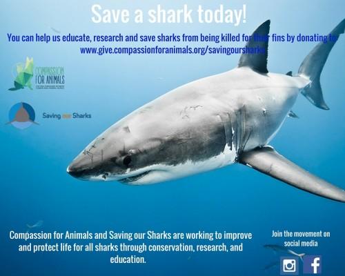 Saving-Sharks-Image2.jpg