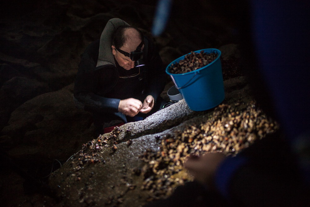 December 20, 2011 - Laxe (La Coruña). Julio checks his daily catch. Due to the sea tides, sometimes thepercebeirosneed to harvest with artificial light. © Thomas Cristofoletti