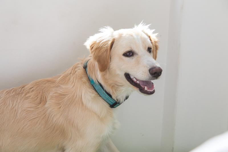 Benji! - Resident dog, Benji, may be a little hell raiser, but he is an endearing accent to an already comfortable environment.