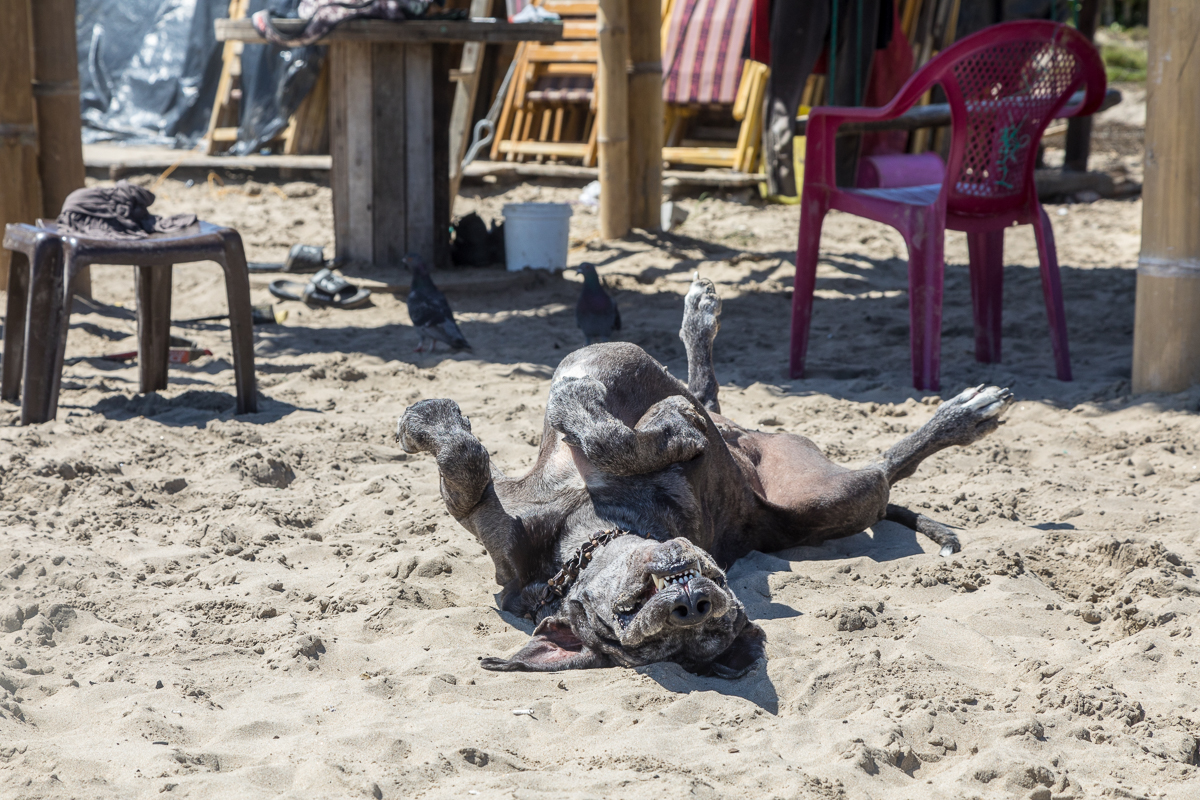 The whole town embraced the beach bum lifestyle - pups included. Check out more pups on our  Perros Del Mundo  album.