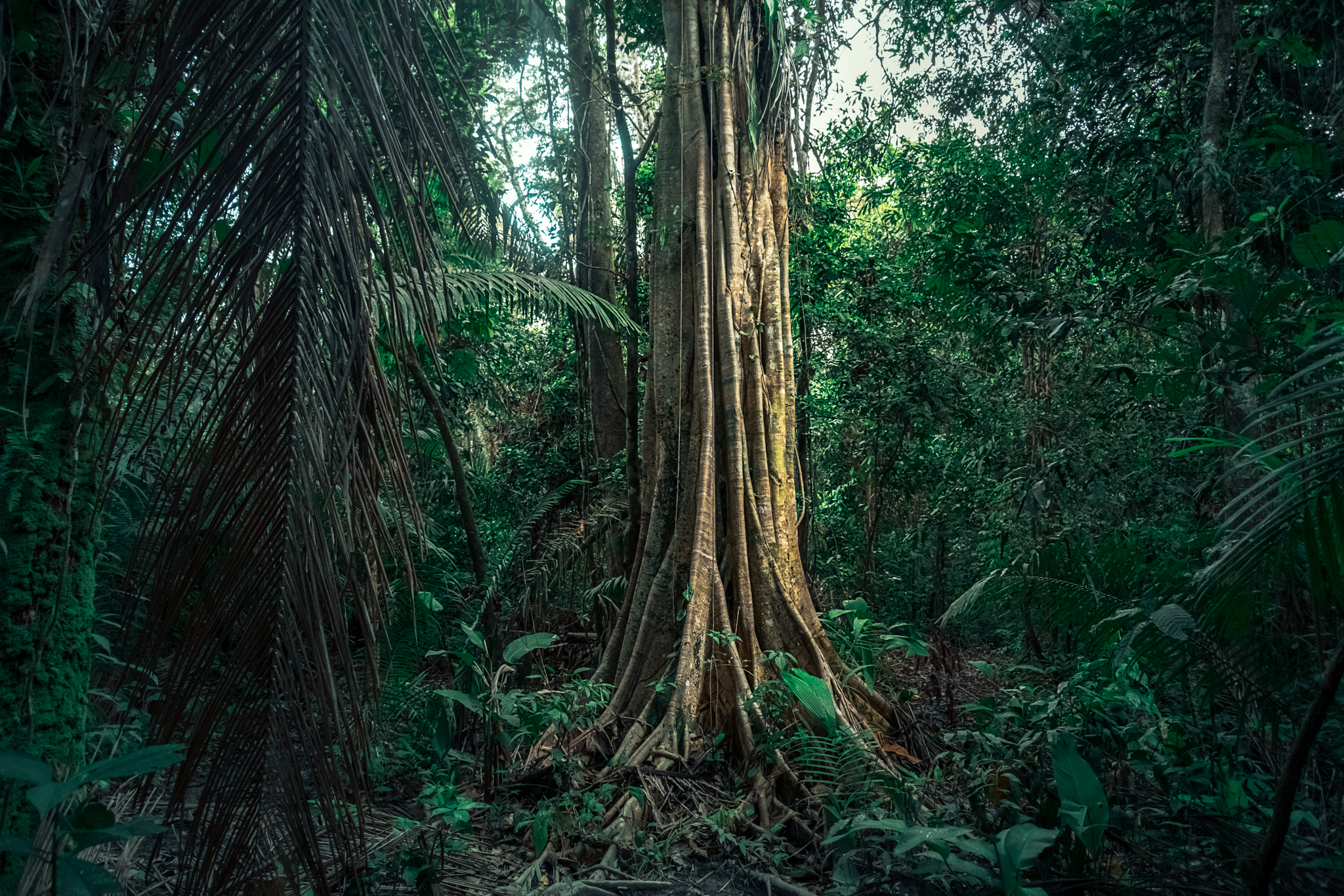 Peru Rainforest -