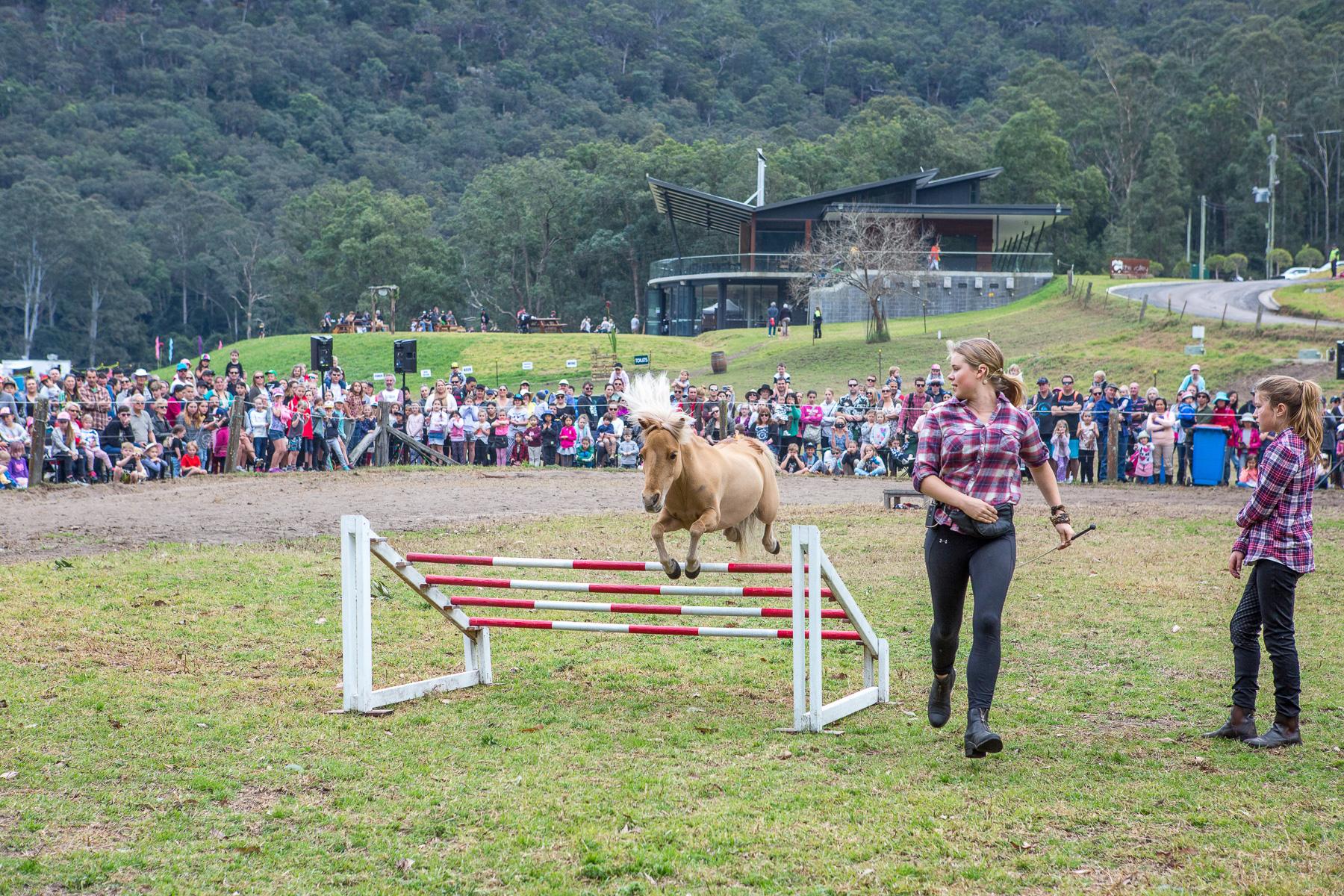 1193GVOA 2017 Horses BDay 0427 LR RGB FA.jpg