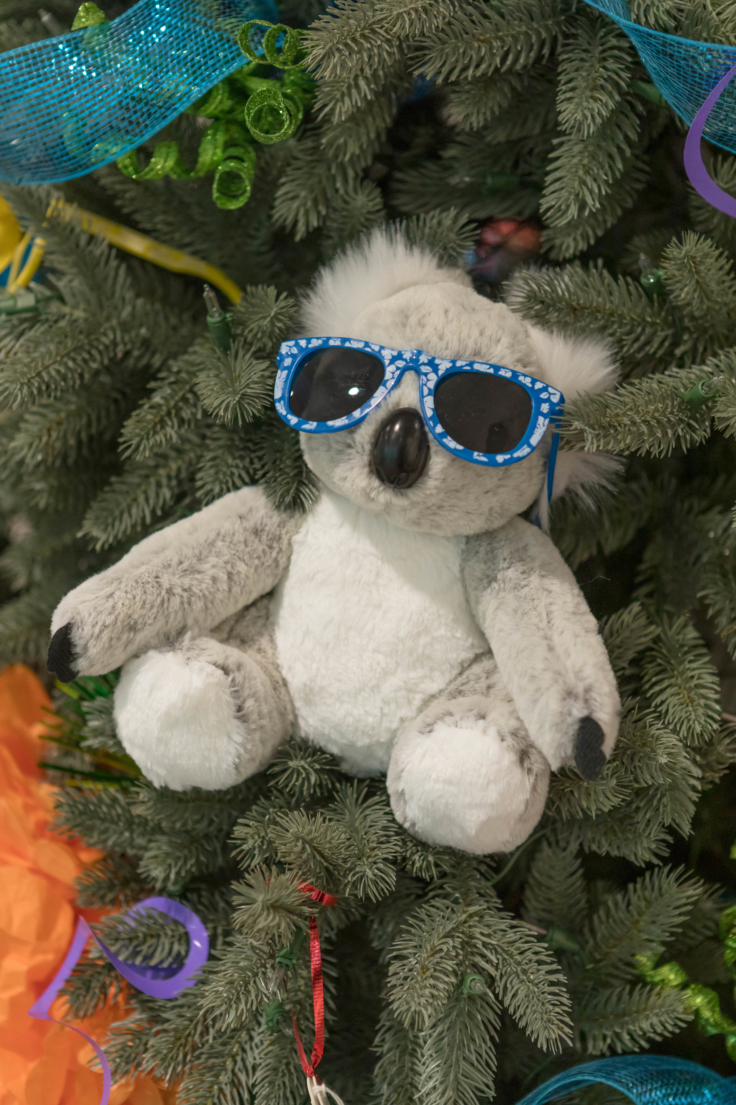 One Kool Koala Bear! The Koala bear is B Brave's symbol. His nickname was Joey Bear, and one significant way that Sam & Sara cared for Joey was by holding him as he lost all ability to support and hold himself up.