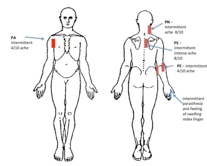 neck+body+image.jpg