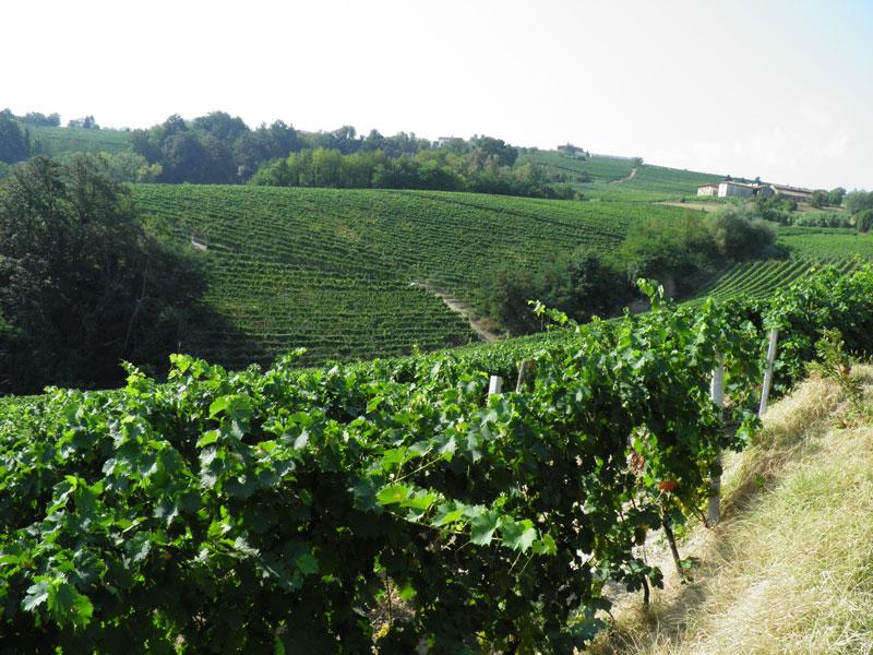 LA MORANDINA - Piedmont, IT