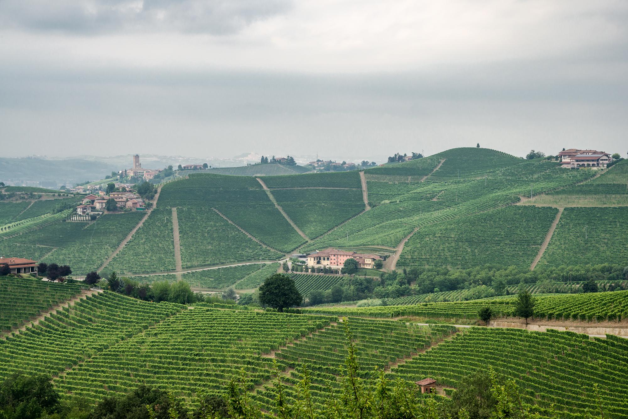 bera - Piedmont, IT