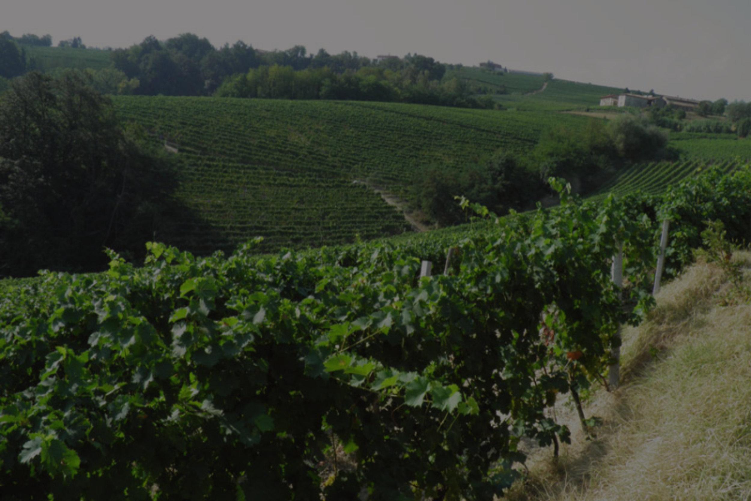 La Morandina [Piedmont, ITA]