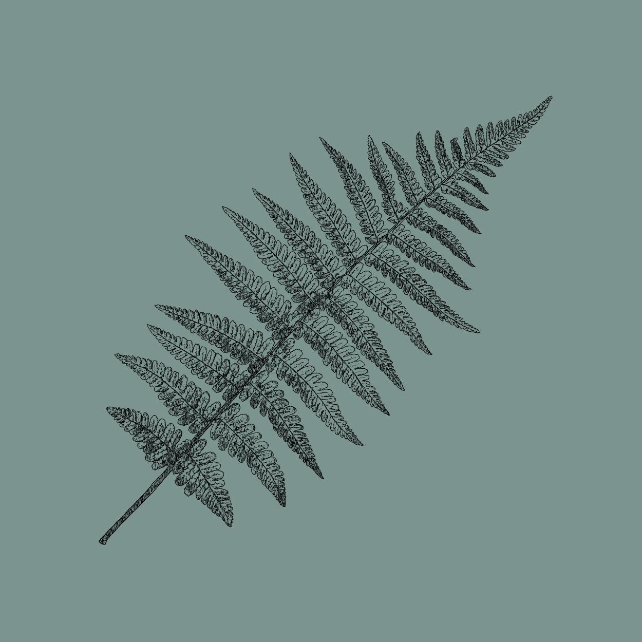 The Bull Bracknell custom fern illustration