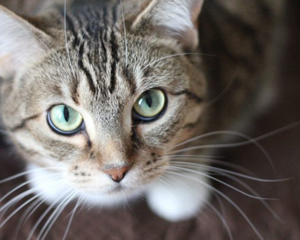 Cats - Keep your cat content with our range of cat food