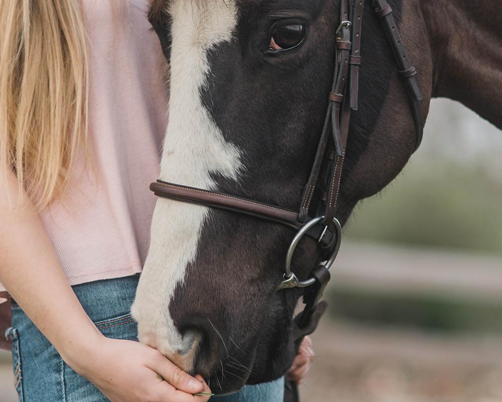 Horses - Great range of horse feed