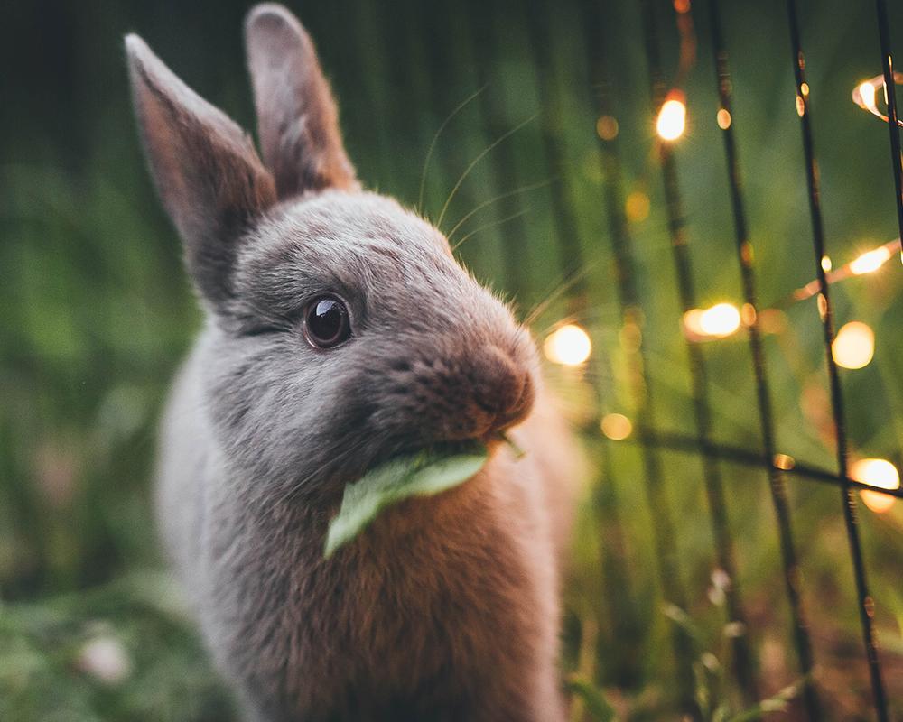 Small Animals - Rabbits and more