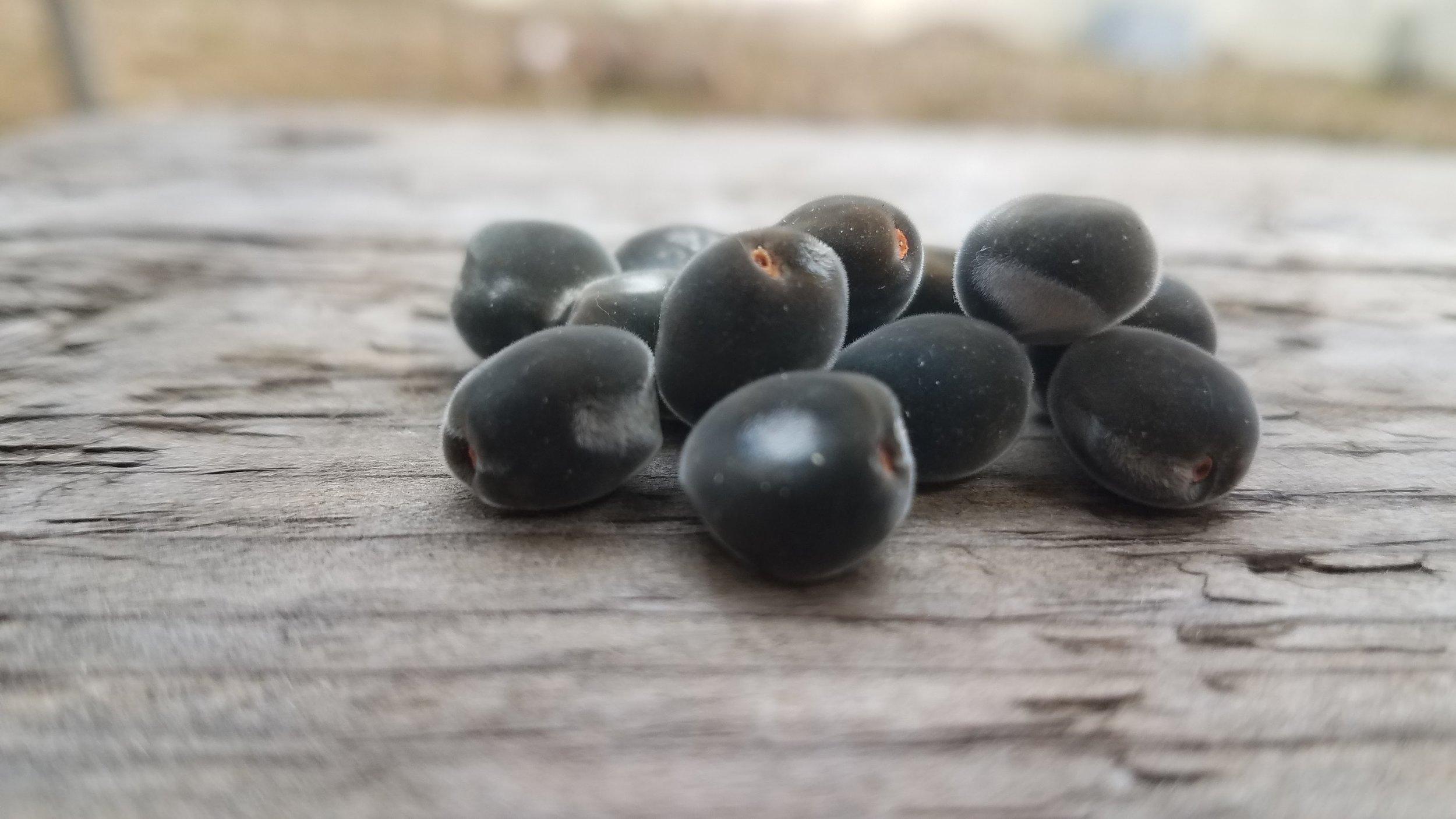 Mgambo Seed