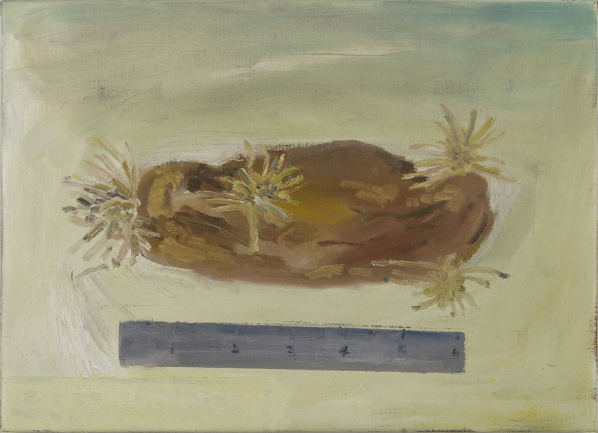 NICK COLLERSON   A Potato , 2017  oil on linen  41 x 56 cm