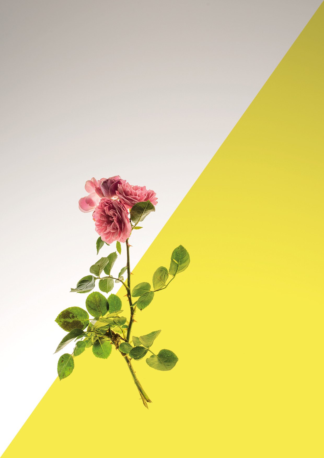 Botanicals | Art Direction | By James-Lee Duffy