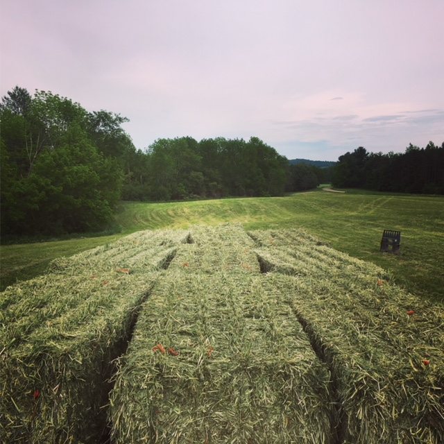 Hay on Trailer.JPG