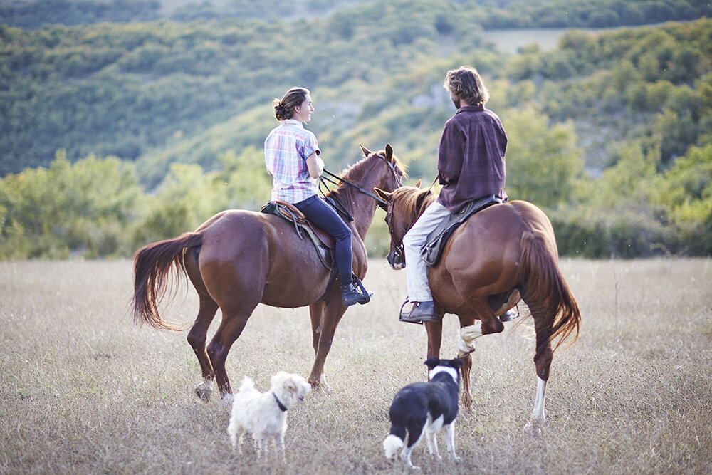 horses-with-dogs.jpg