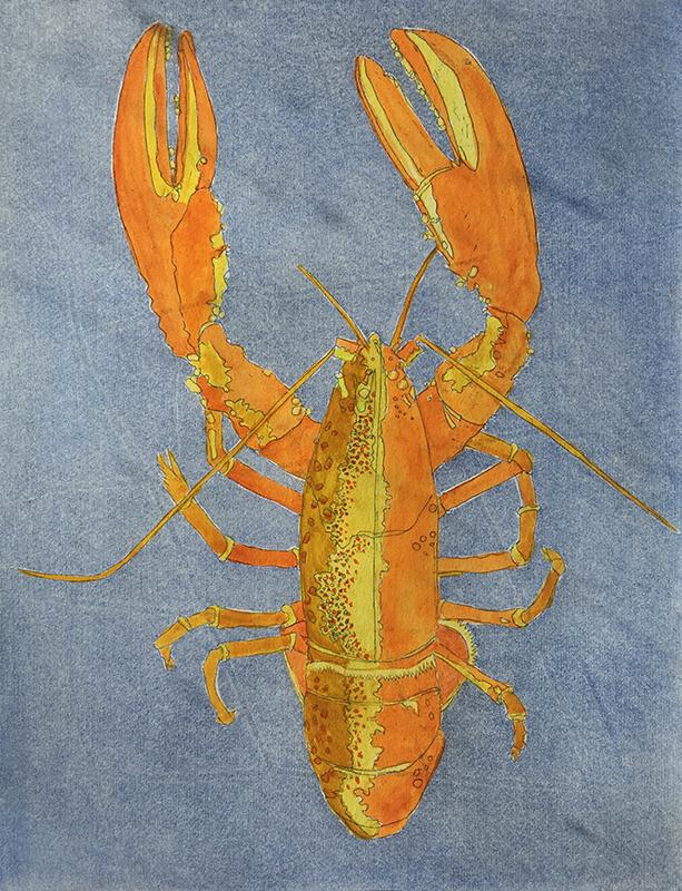 Orange Lobster on Blue