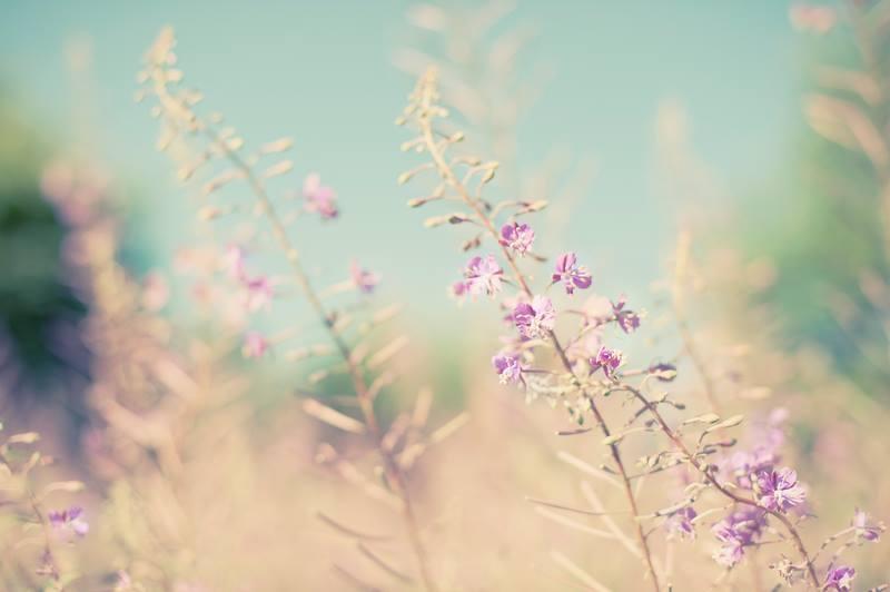 Zauber der Weiblichkeit 30. November und 1. Dezember 2019    Ein heilsames Wochenendseminar für Frauen, die im geschützten Rahmen anderer Frauen ihr Herz für ihre Weiblichkeit öffnen möchten, um diese im Spiegel der Anderen zu erkennen, zu genießen, zu würdigen, zu lieben und zu feiern!  Es wird Zeiten der Stille, des achtsamen Sprechens, des Lachens, des Tanzens, des sanften Bewegens, der Berührungen und ausreichend Raum für Fühlen und Sein geben.  Wir verbinden uns mit der geerdeten, fließenden Kraft der Weiblichkeit. Mit Leichtigkeit erforschen wir unseren Herzraum und verbinden diesen, auf zarte Art und Weise, mit der feinen Energie unserer Brüste!