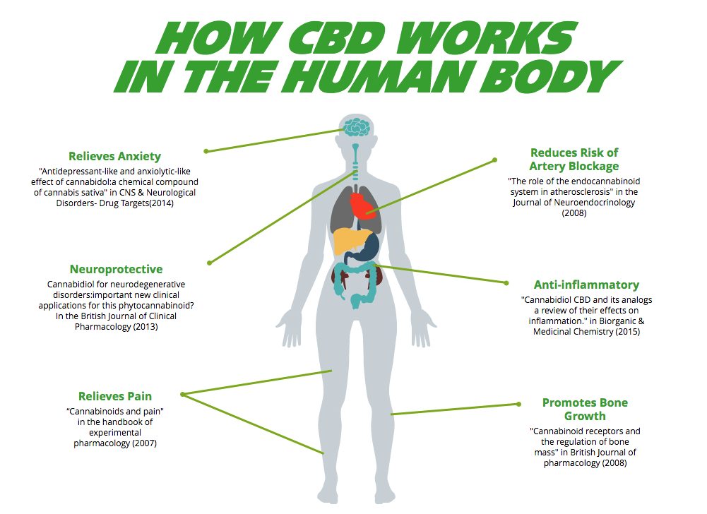 The Endocannabinoid System is the way the brain communicates with itself and regulates metabolism, sleep, pain, and every organ in the body. CBD 7 feeds or heals that system, making you happier and healthier in so many ways. It's a collection of natural nutrients the body uses and has no detrimental side effects. You just feel better because… you are!