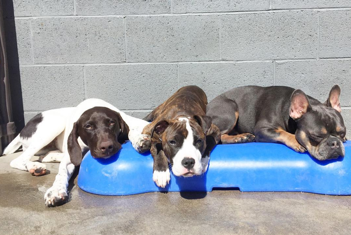 Daycare - All of us at Doggie Daycare Center love dogs and get to know each and every one. We welcome discussions and special requests from parents to make each dog's visit special.