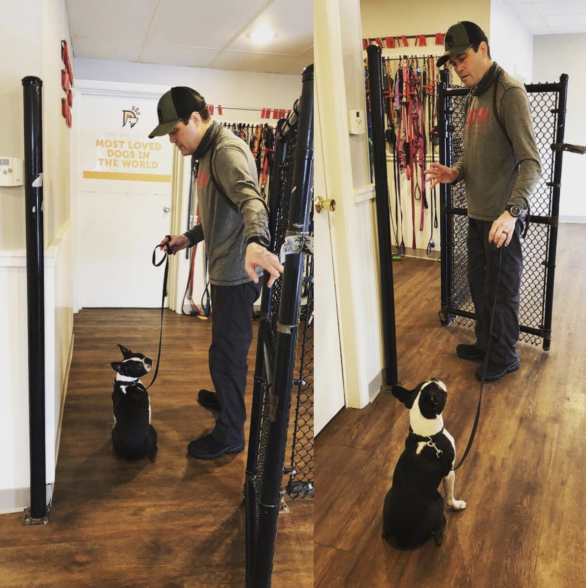 Training - Training is available upon request for our daycare quests. Some parents find that in addition to the benefits dog daycare provides, they have specific training objectives as well.Training can be conveniently provided during daycare.$30 per 30 minute training session