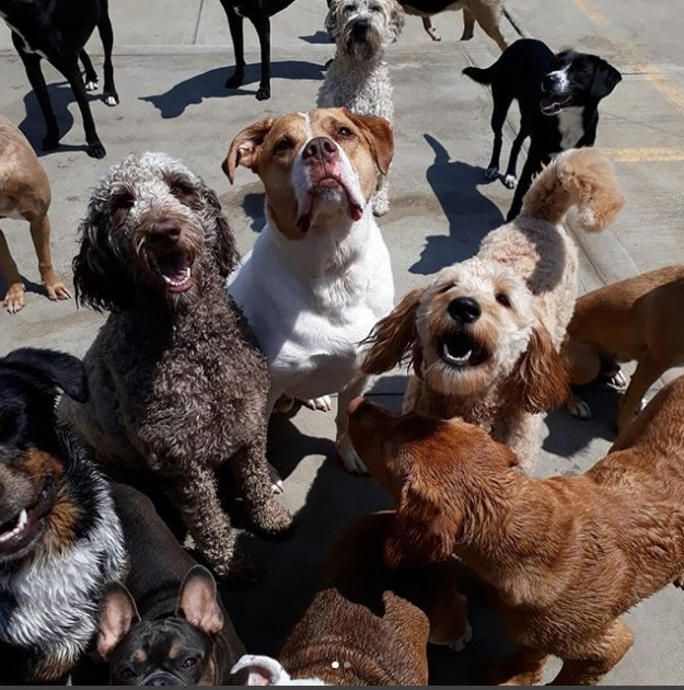 Getting Started - To ensure the safety of every one in our Doggie Daycare Center family; the following criteria are required:Dogs must be at least 3 months old.Dogs over 7 months must be spayed/neutered.Dogs must be current on the following vaccinations: Rabies,Distemper Booster (DHLP), Bordetella,Canine InfluenzaDogs must pass a behavior assessment to ensure each dog is dog/people friendly