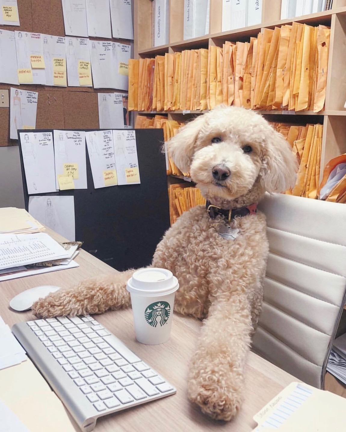 Our CFO Tucker, hard at work crunching the numbers