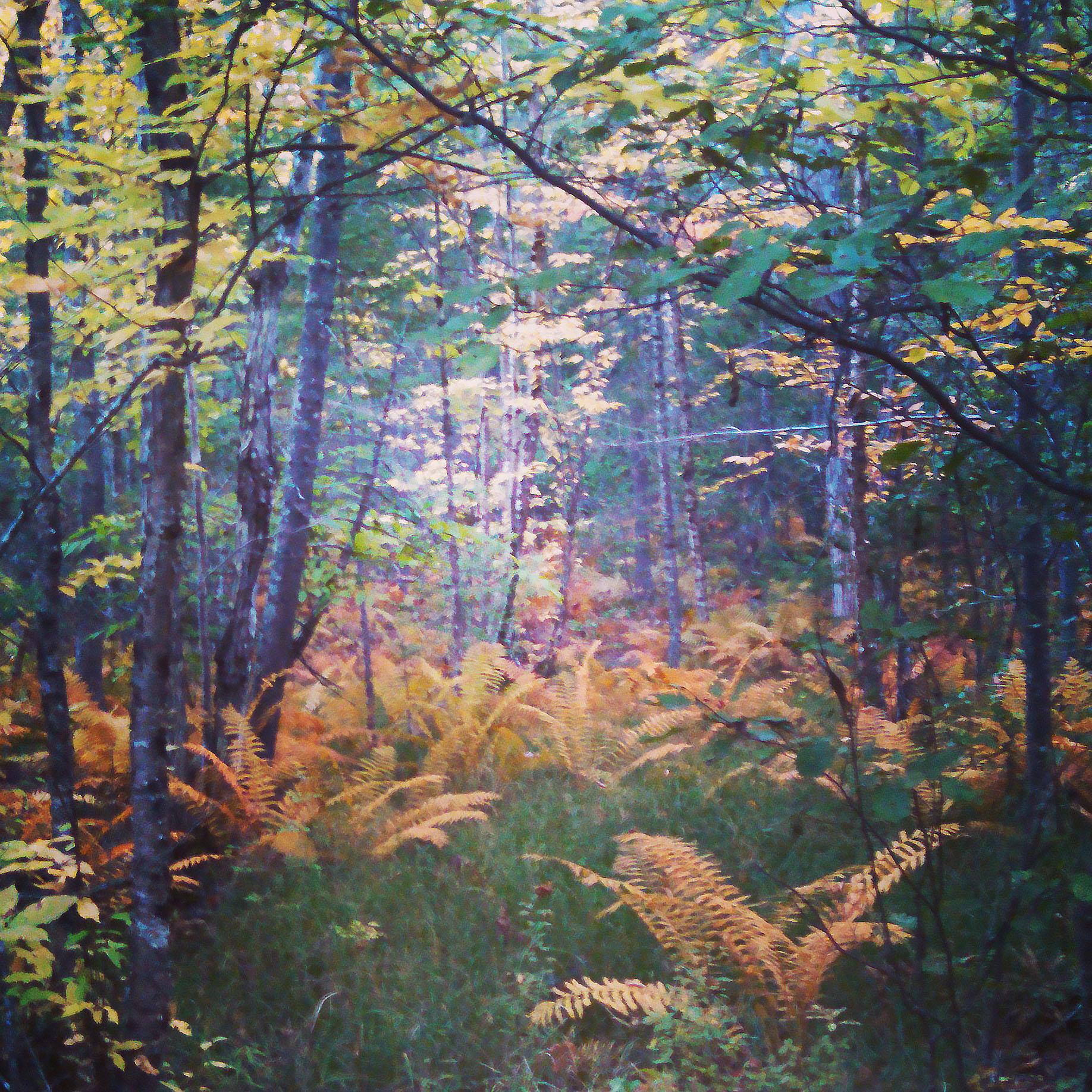 fern field A.jpg