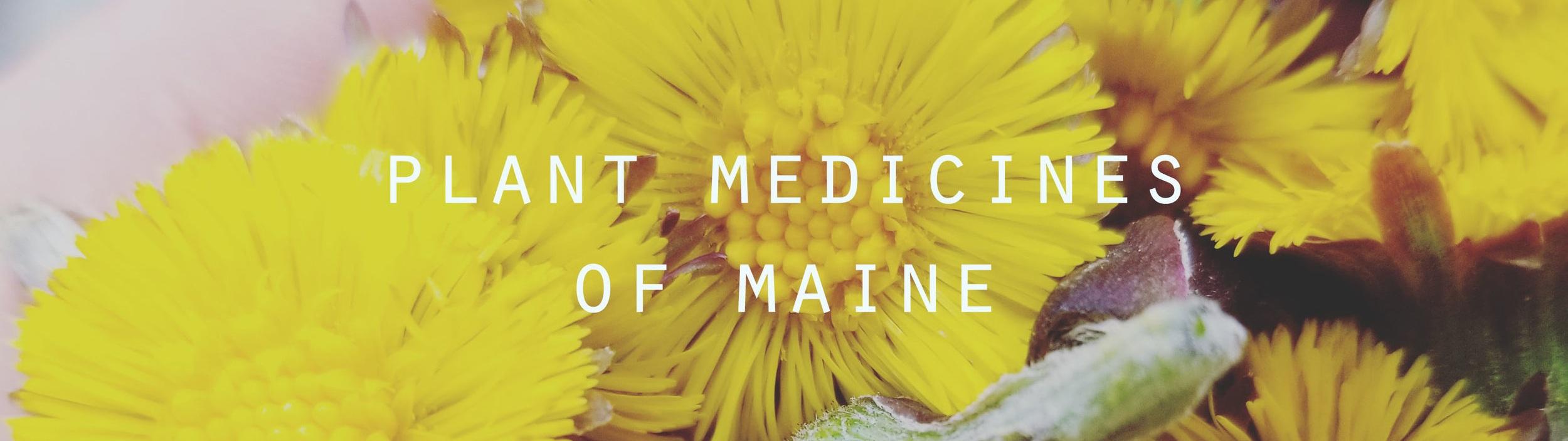 plant+medicines.jpg