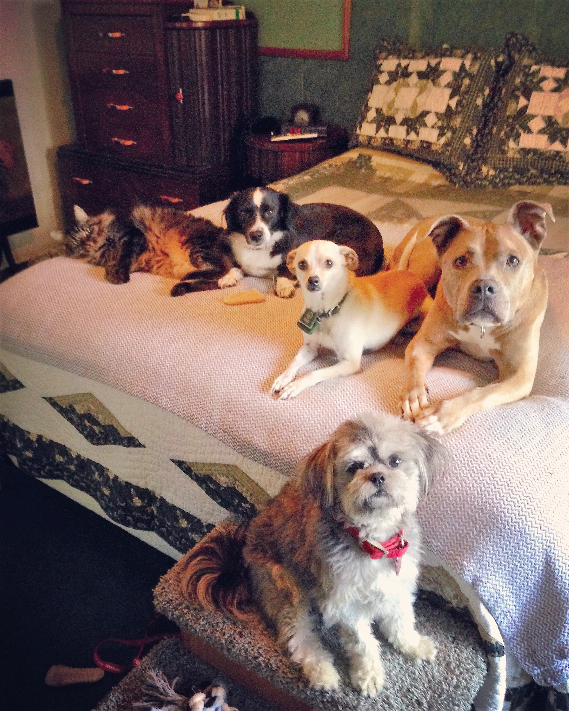 2015-11-26 Bob, Luna, Baron, Lexi & Domino.JPG