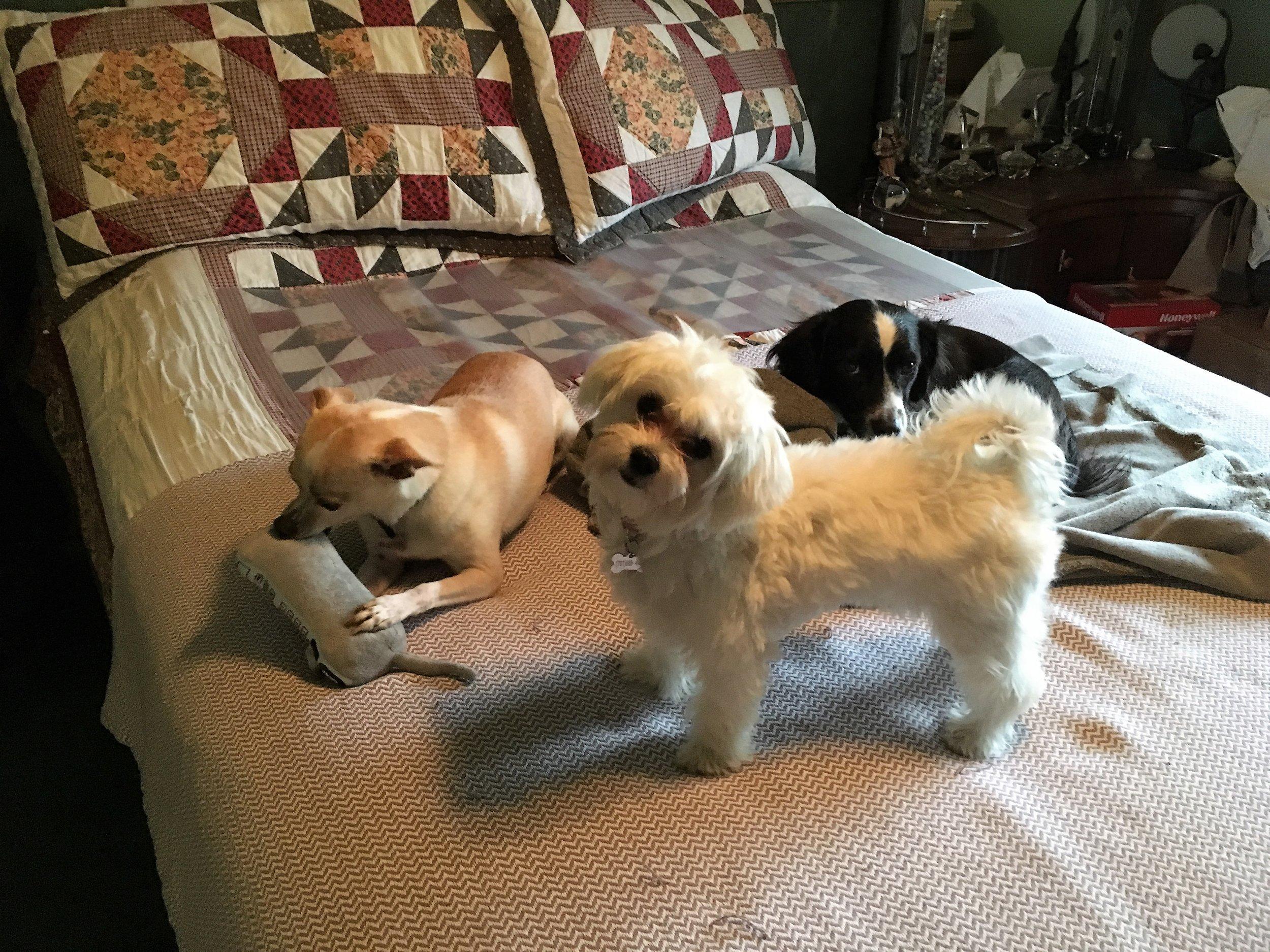 2017-8-24 Baron, Abby & Luna.JPG