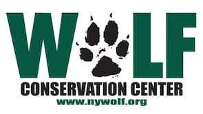 wolf conservation center 2.jpg