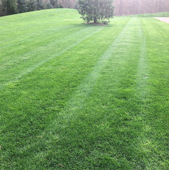 How Professional Lawn Mowing and Care Can Set a Bainbridge, OH Lawn Up For Success All Year Round