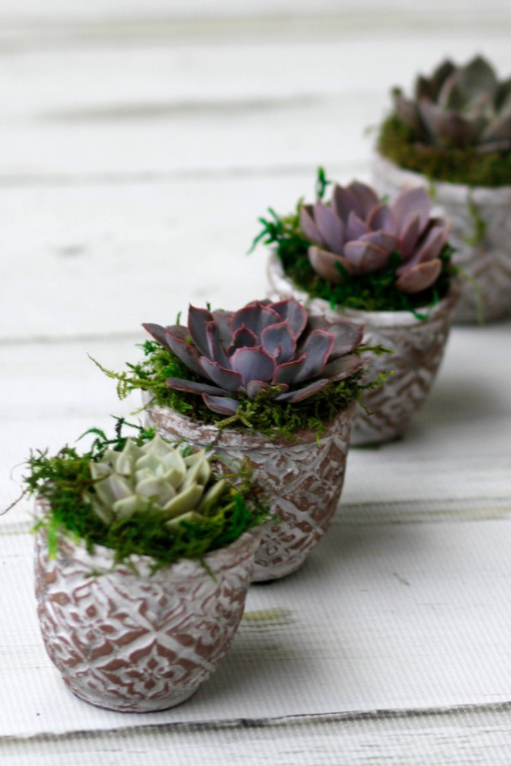 Echeveria Succulent pots,small succulent wedding favor.png