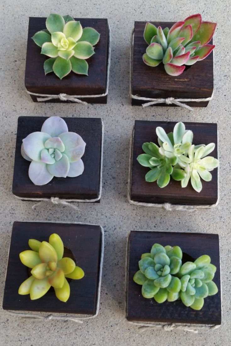 75 succulent favors dark stain wood planters (2).png
