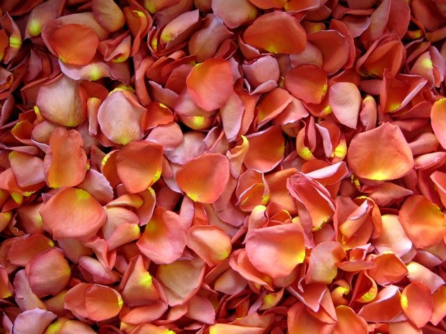 Freeze Dried Rose Petals, Coral, 30 cups of REAL rose petals, perfectly preserved