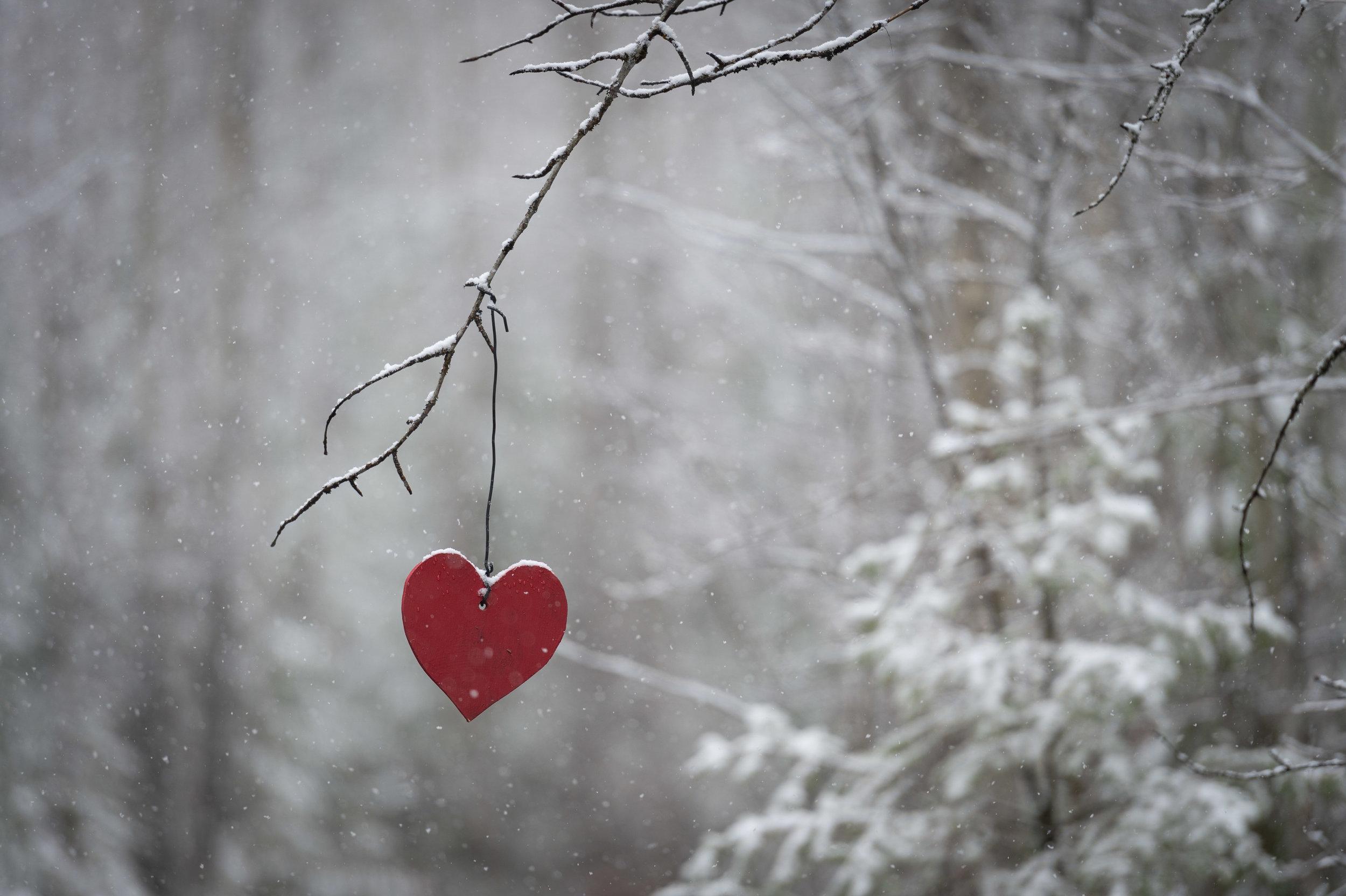 Romantic Elopement at Tin Poppy Retreat in British Columbia.jpg