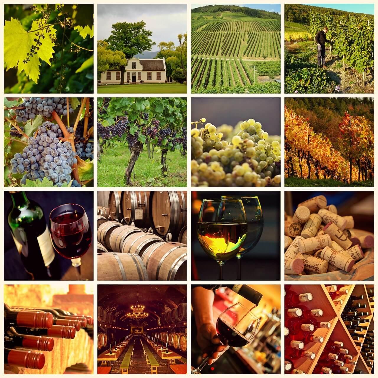 wine-1597376_1280-2.jpg