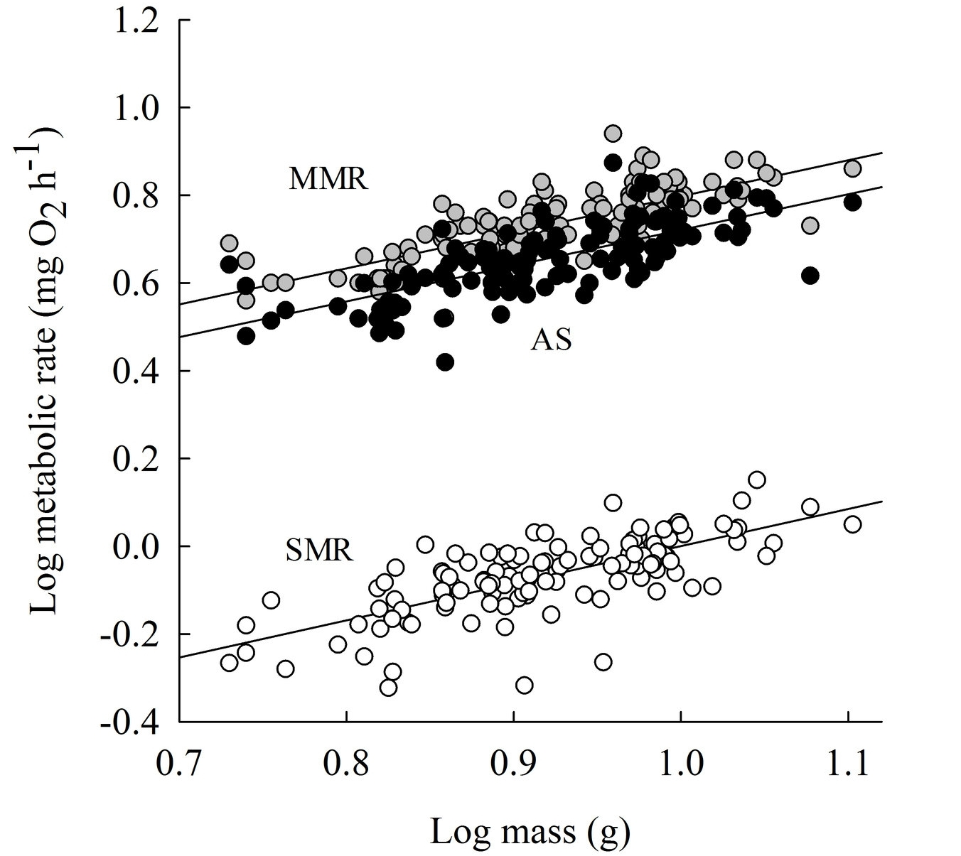 Relationships between log10-transformed standard metabolic rate (SMR), maximum metabolic rate (MMR), aerobic scope (AS) and body mass (g) of juvenile brown trout.