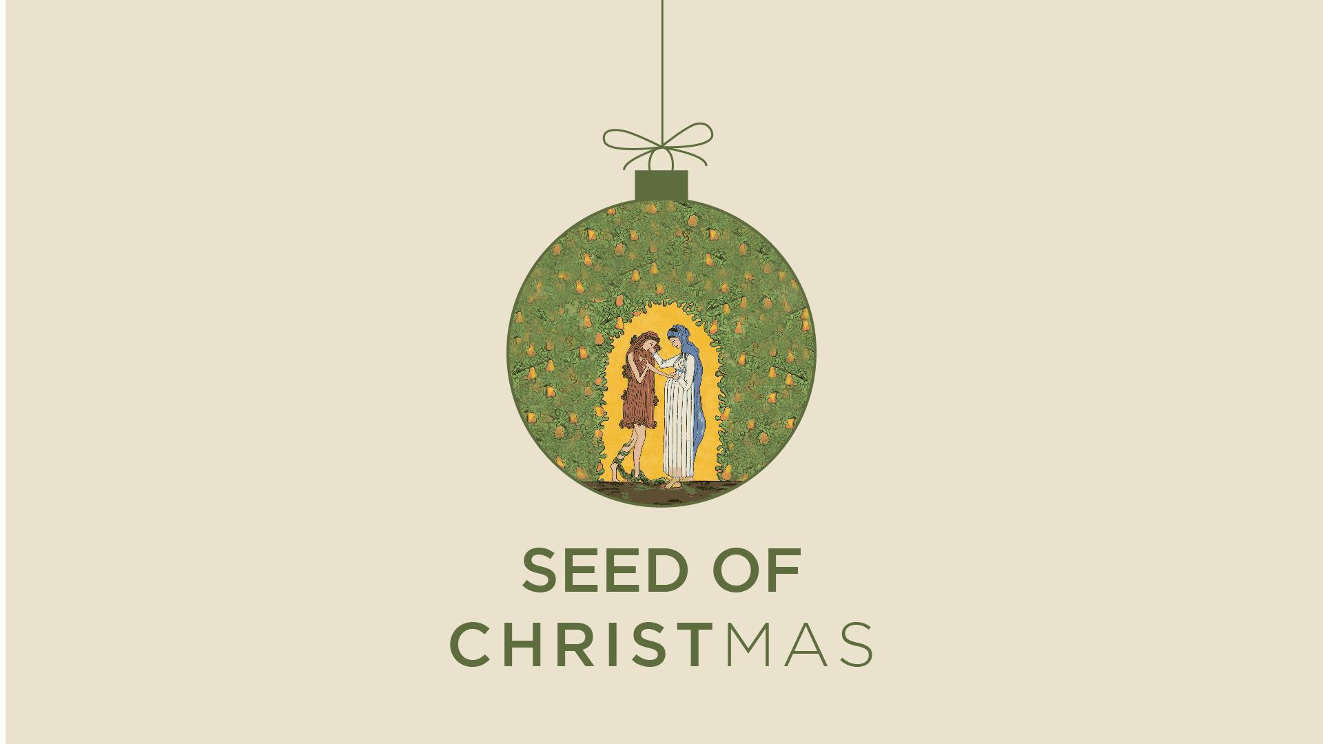 Advent 2017 | Seed of Christmas