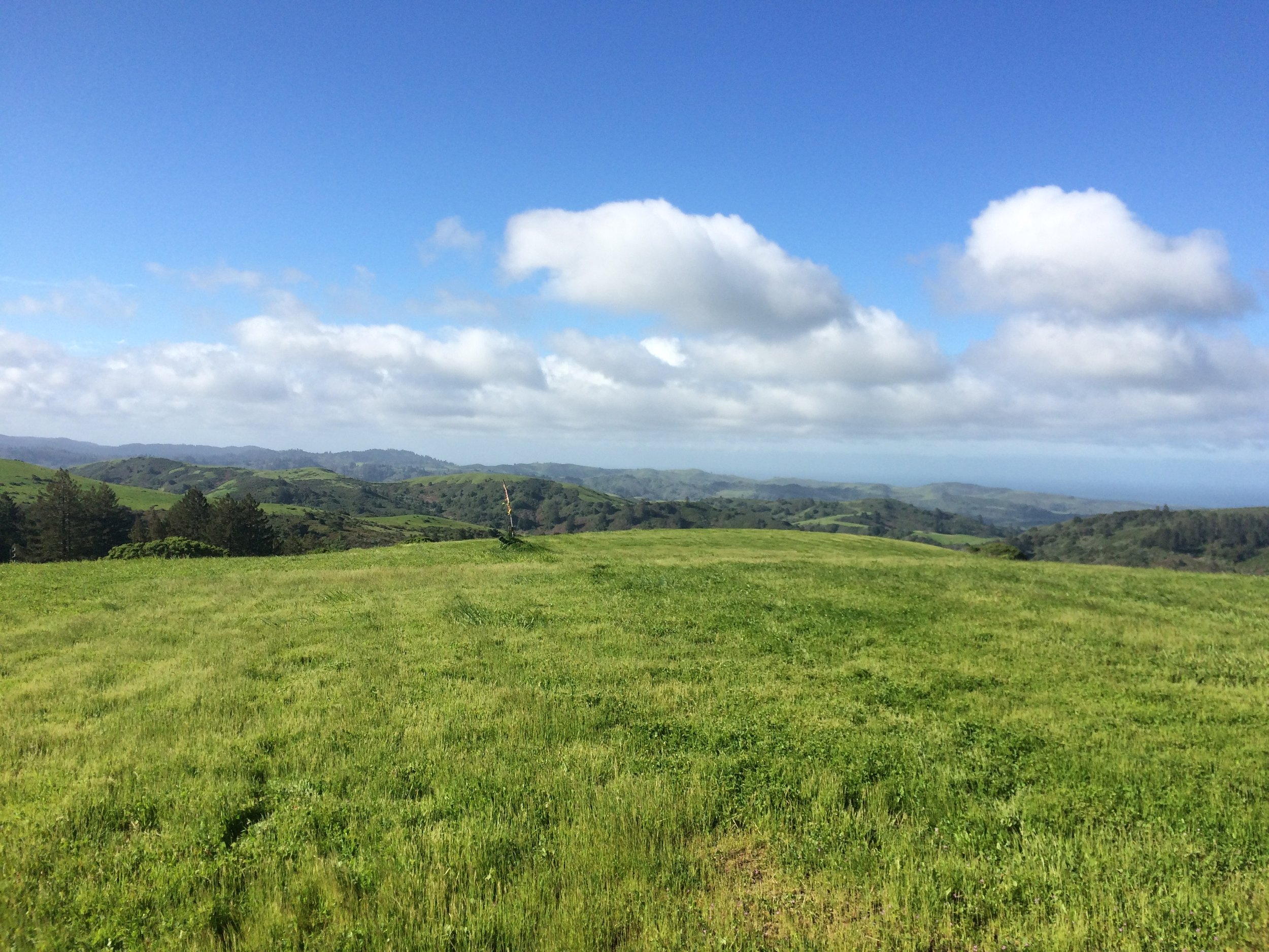 View from the dance studio at Djerassi Resident Artists Program. Photo by Hannah Wasielewski