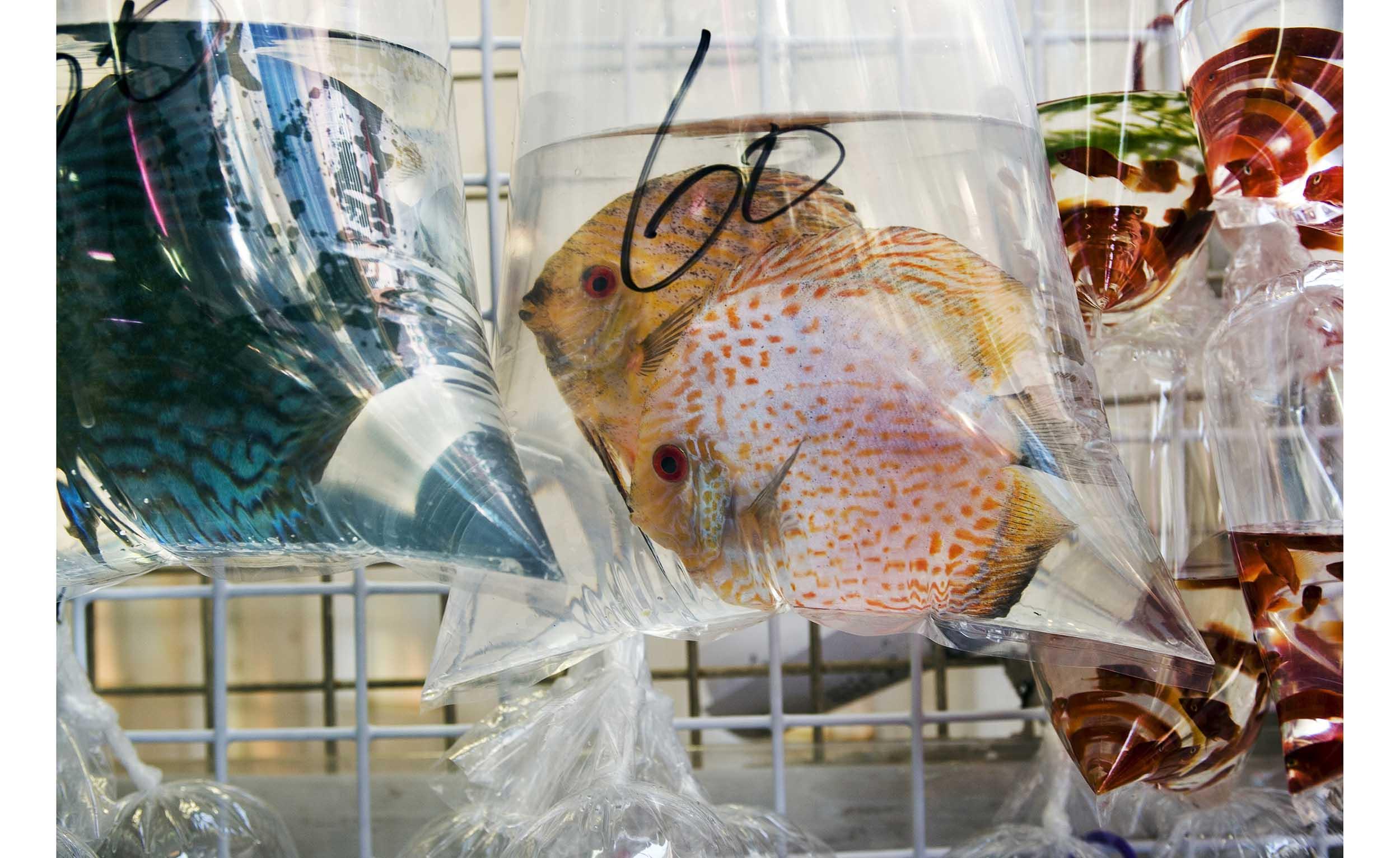hongKongTropicalFish_f.jpg