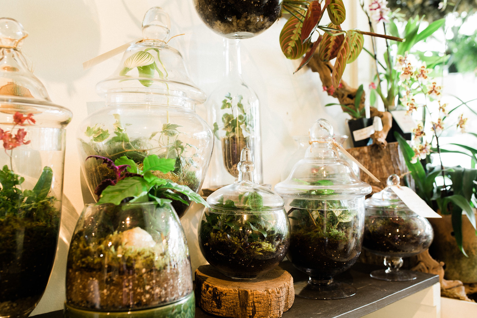 terrariums & more
