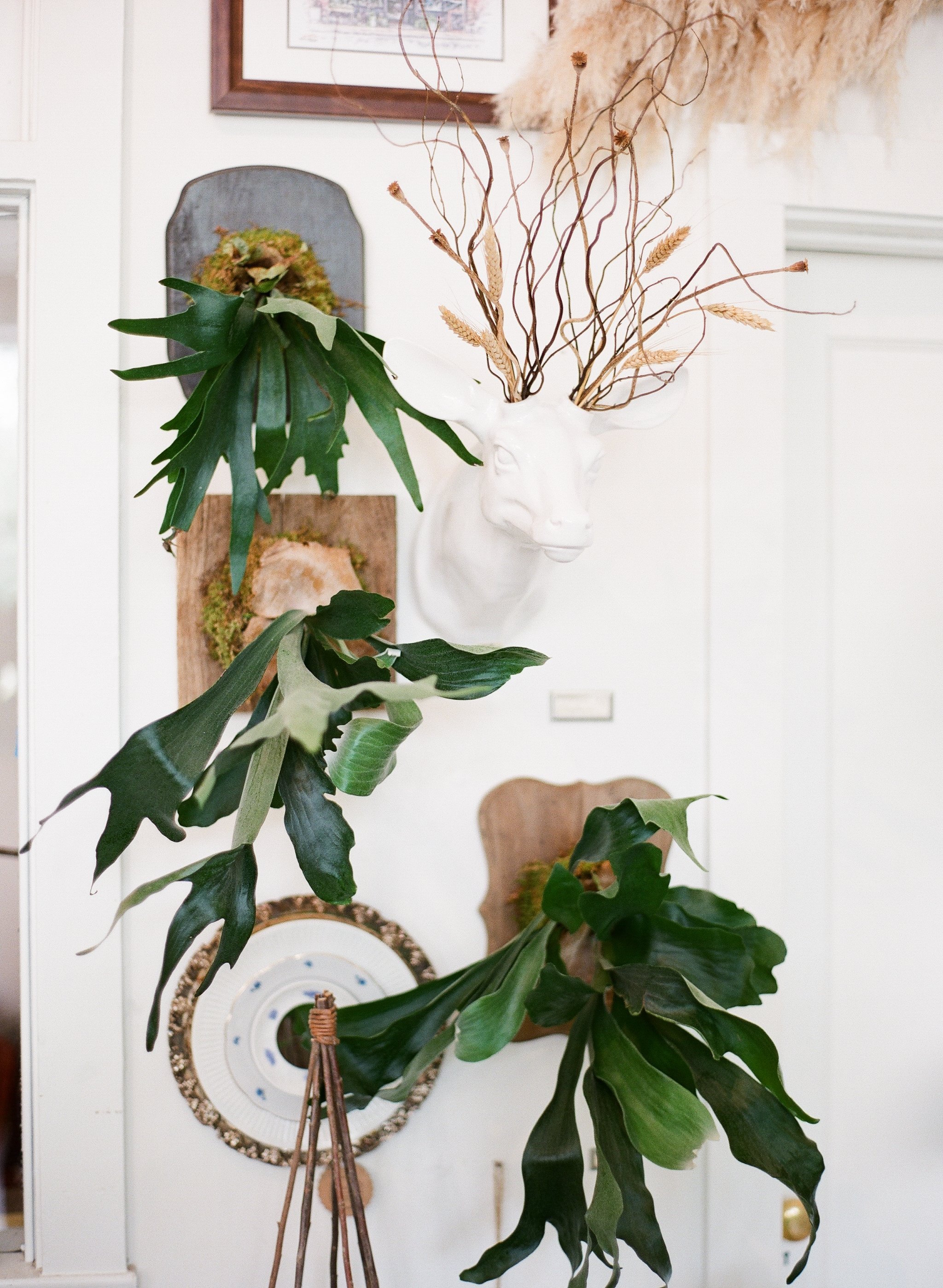 botanical wall mounts