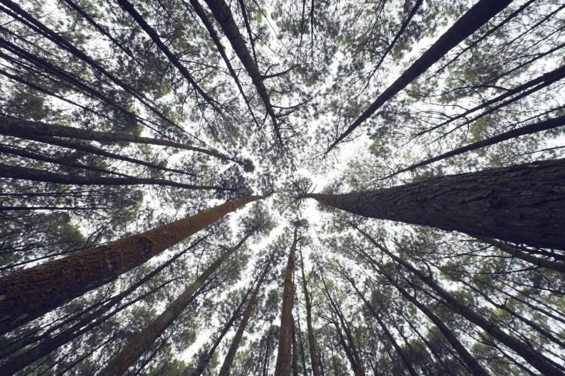 Forest-e1435025794170.jpg