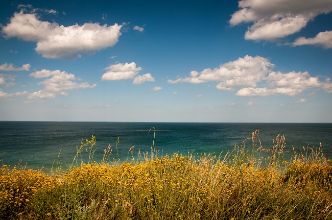 Ocean-view-over-grass-650px.jpg