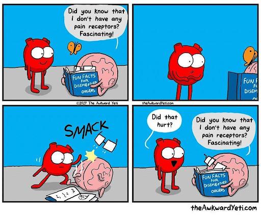 pain receptors.png