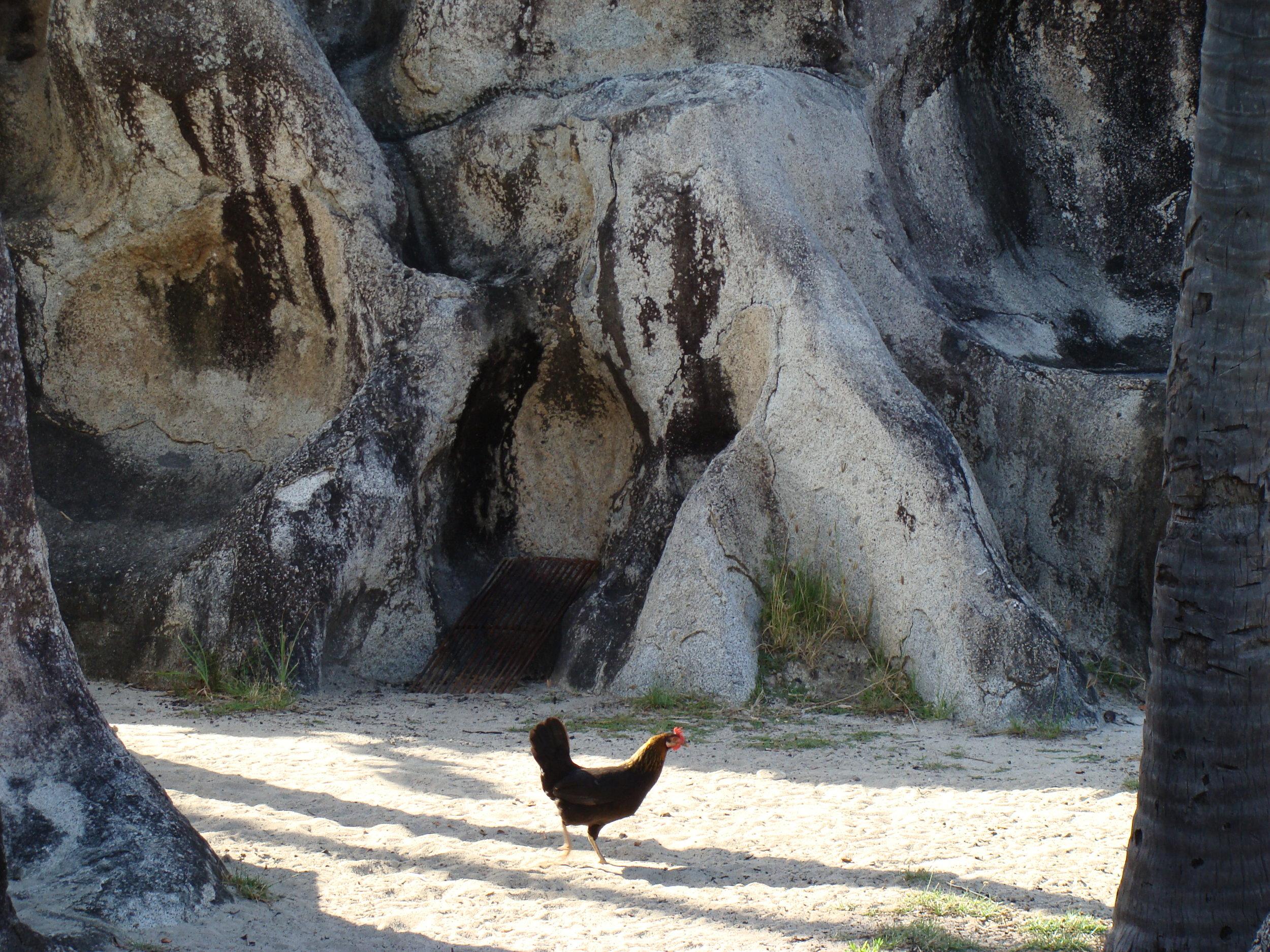 chicken_rocks.JPG
